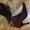 Кожаные сапожки #556621