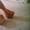 Туфли женские на высоком каблуке с платформой и украшением 38 #967847