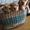 Лучшие щенки кокер-спаниеля в Магнитогорске #1052696
