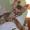 Котенок корниш рекс от родителей чемпионов #1108422