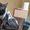 Кошечка ищет хозяина или хозяйку #1235327