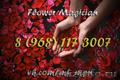 Flower Magician(Говорящие, разноцветные, светящиеся цветы)