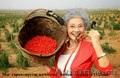 Уникальные ягоды годжи